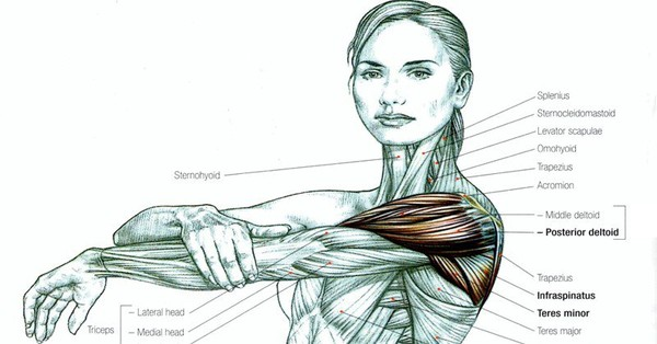 Read This Before Ever Stretching Again (and that includes for your back and sciatica pain) - Healthy Food Society