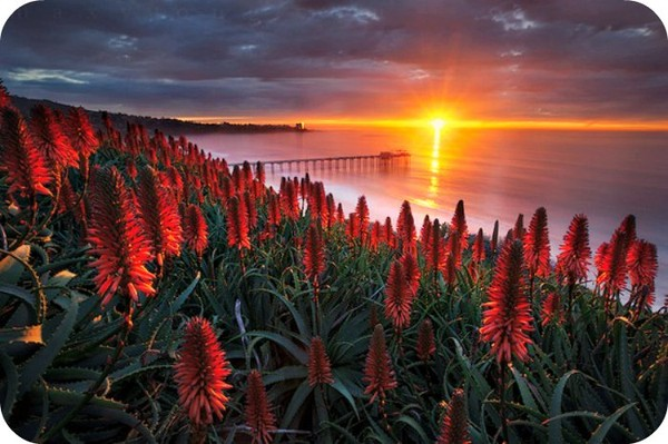 You are my Sunshine. - Daily Poetry and Stories Portal | Easy Branches