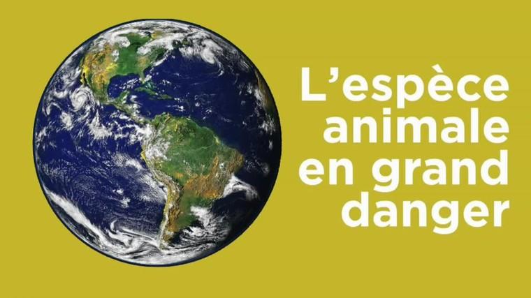 VIDÉO – Lions d'Afrique, orangs-outans, girafes… Ces espèces qui disparaissent petit à petit de la Terre