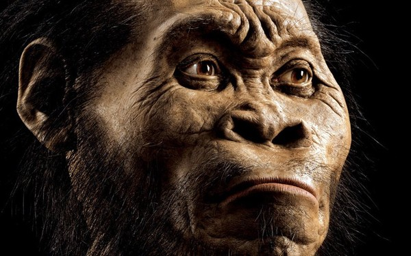 Homo naledi, a new species of human, discovered in a cave in South Africa