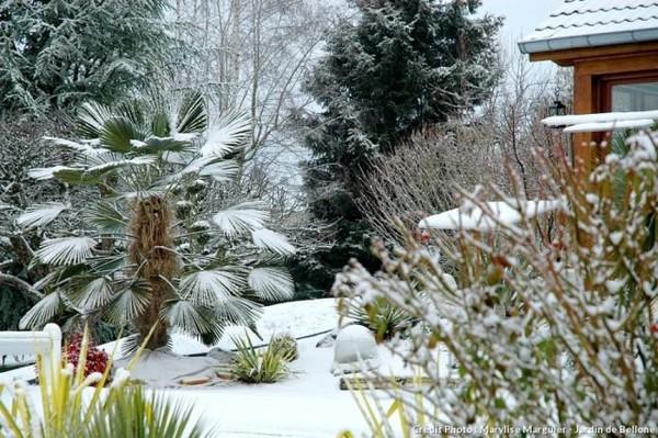Protéger vos plantes du froid