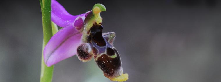 Orchidée 2018 | Exposition d'orchidées à Paris