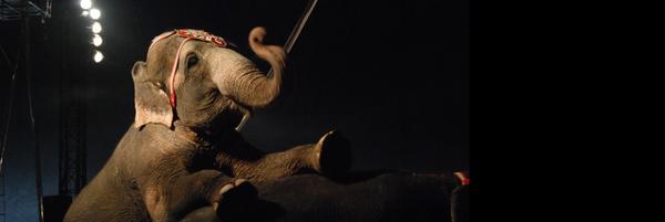 Pour des cirques sans animaux sauvages - Fondation 30 Millions d'Amis