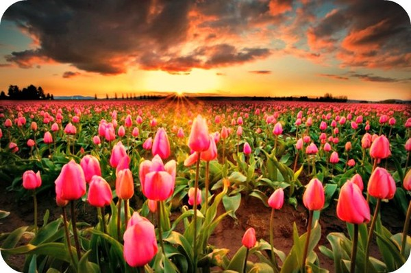 A Positive Thoughts in the Morning can make Our Day. - Daily Poetry and Stories Portal | Easy Branches