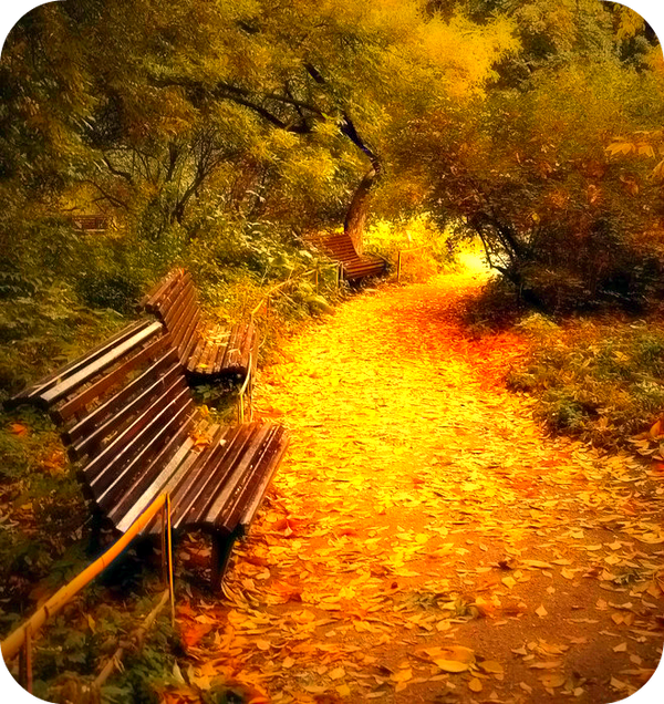 Hope Ends when You Stop Believing.|Daily Poetry and Stories Portal | Easy Branches