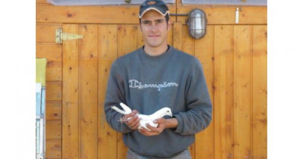 Vente des Pigeons de Feu Mathieu GOSSELIN.pdf