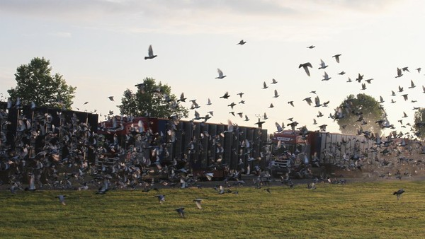 Beaumont-de-Lomagne : à Borde-Vieille, les pigeons ont pris la place des trotteurs