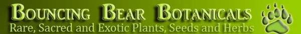 Sutherlandia frutescens (Cancer bush, Balloon pea, Sutherlandia) Bouncing Bear Botanicals, a major supplier of sacred plants, ethnobotanicals, herbs and more.