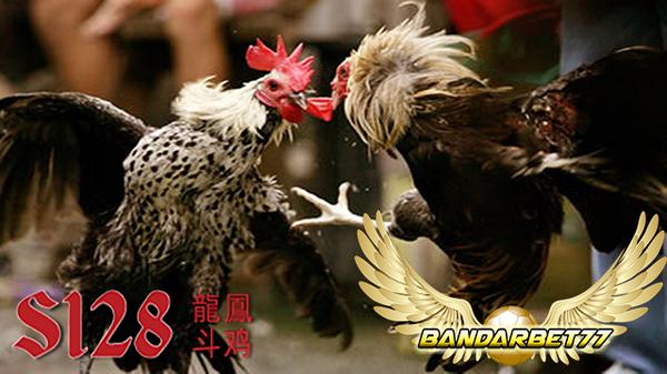 Dengan Bermain Sabung Ayam Bisa Dapat Uang Jutaan Rupiah