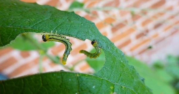 Une découverte sans précédent : les plantes savent quand elle sont en train d'être mangées