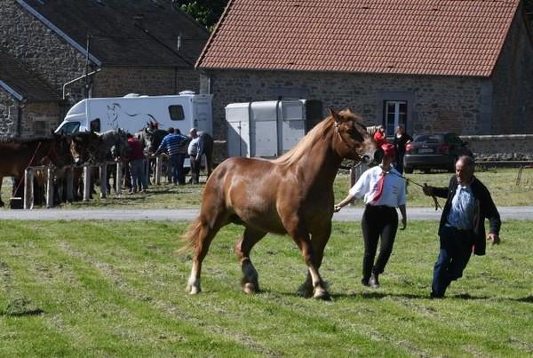 Animaux - Brigitte Bardot réagit au commerce de viande de cheval entre la Creuse et le Japon