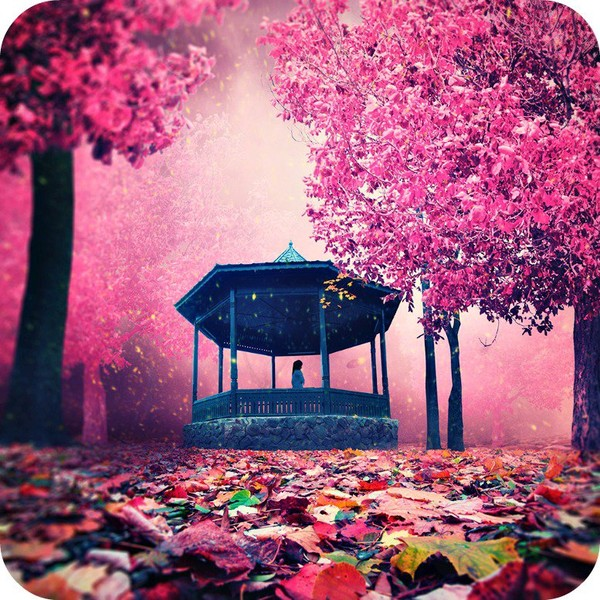 Cherish Yesterday, Live Today and Dream for Tomorrow. - Daily Poetry and Stories Portal | Easy Branches