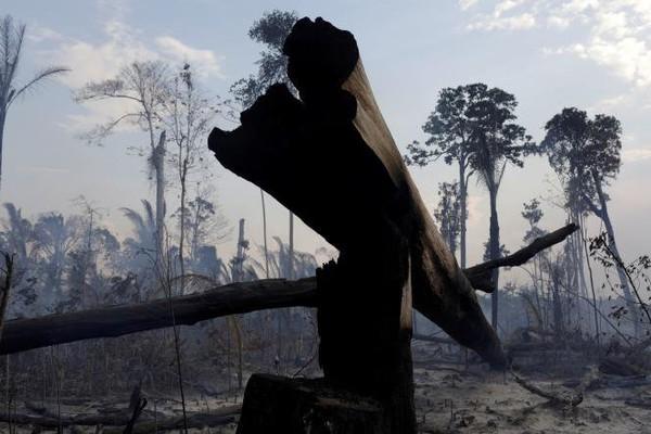 «L'Amazonie, notre dernier rempart, est en train de basculer» en émettant plus de carbone qu'en en absorbant