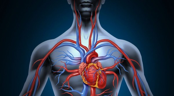 How to Improve Blood Circulation Naturally - Healthy Food Society