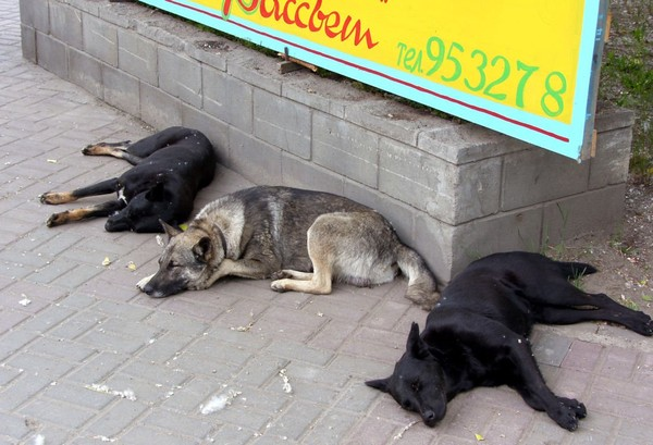 La Russie tue des milliers de chiens errants avant la Coupe du Monde