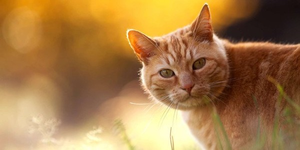 Ginger Cat Hd Wallpapers Messilio10s Blog