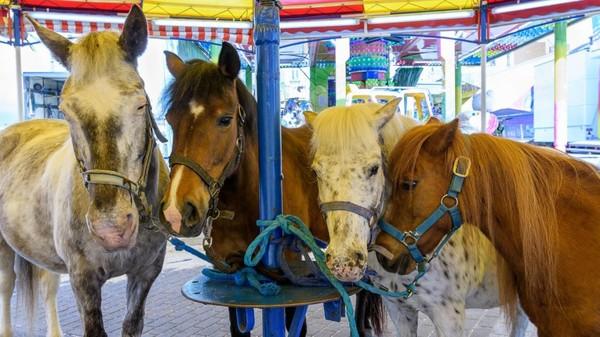 Charleroi: vive polémique sur le manège des poneys