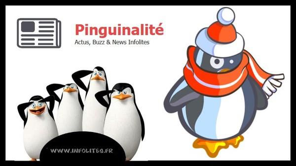 Photos & Images Insolites - Pinguinalité