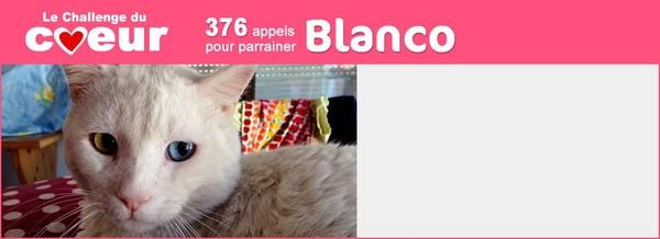 BLANCO : LES COUSSINETS EN SANG... - ClicAnimaux