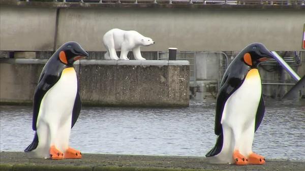 Des ours polaires… en bord de Meuse!