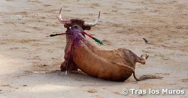Exigeons la fin des corridas et lâchers de taureaux en Espagne