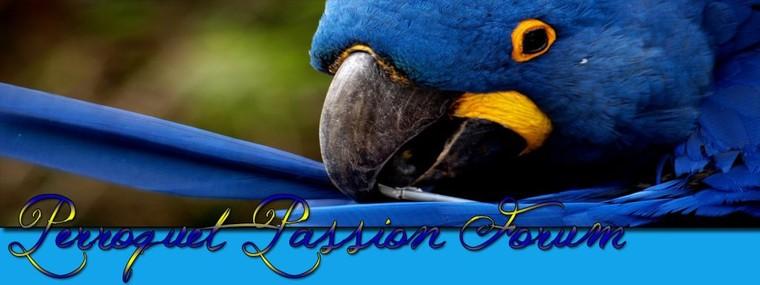 Perroquet passion forum