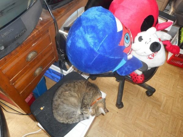T'es maintenant en couple avec Hommage-Grisette-ma-chat