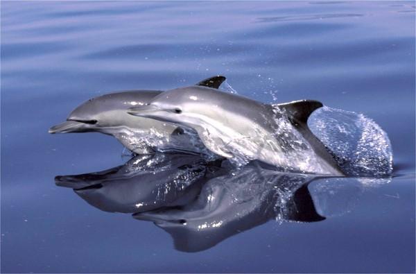 Le massacre des dauphins de la baie de Taiji a commencé - Monde - MYTF1News