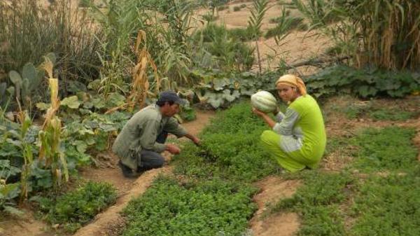 Avec ses jardins écolos, un village marocain sinistré revit et fait des émules