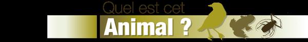 Coléoptères de France - Quel est cet animal ?