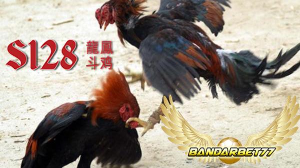 Daftar Agen Sabung Ayam Resmi Terbaik 2017   Bandabet77