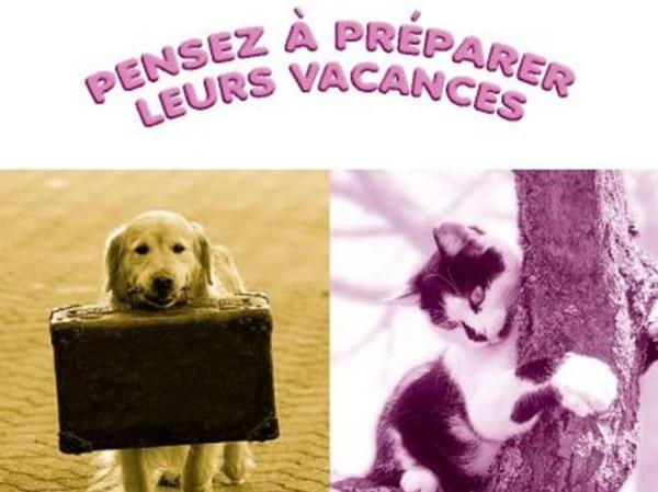 Une campagne contre l'abandon des chiens et des chats