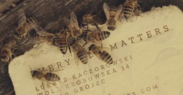 Ce papier conçu spécialement pour fournir une source d'alimentation aux pollinisateurs a besoin que vous le déposiez dans la nature. Une idée géniale.