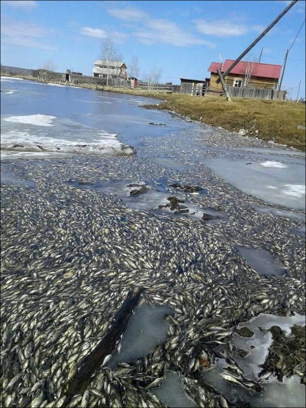 Mass Death of Fish is a Matter of Worry - NICE PLACE TO VISIT