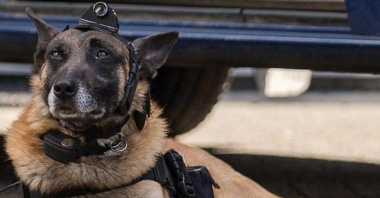 Fusillades à Forest: un chien envoyé en éclaireur avec une caméra dans le terrain vague où était caché un suspect