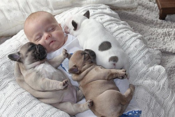 Very simple baby french bulldogs - NICE PLACE TO VISIT