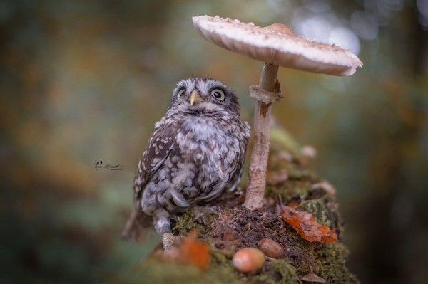 http://www.niceplacevisit.com/extremely-one-kind-little-owl-pet/