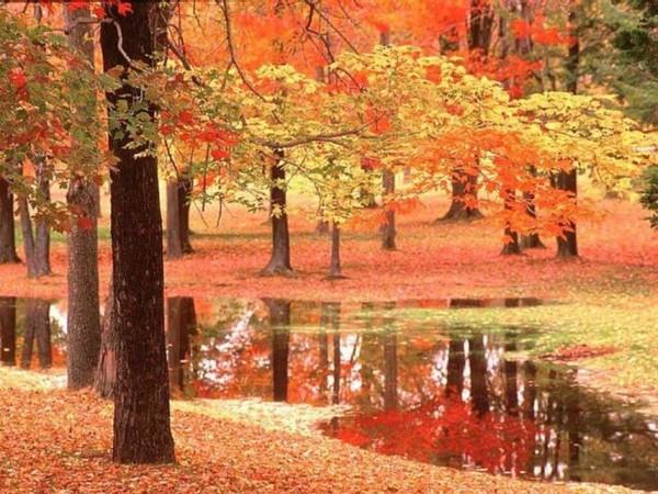La terre la nature les couleurs les ruisseau,