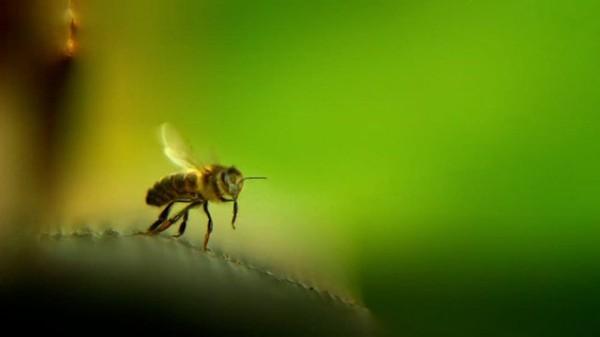 Avec mes abeilles
