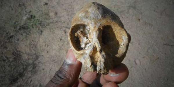 Un crâne de 13millions d'années éclaire l'origine des grands singes