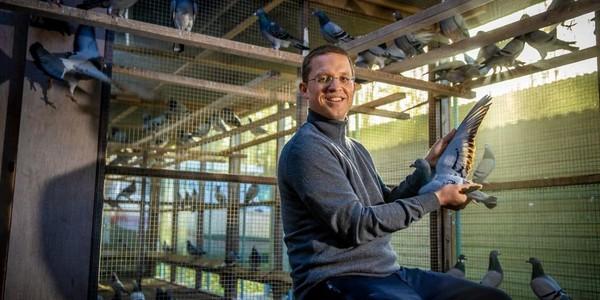 Voici Nikolaas, l'homme qui transforme les pigeons belges en pépites qui valent des millions