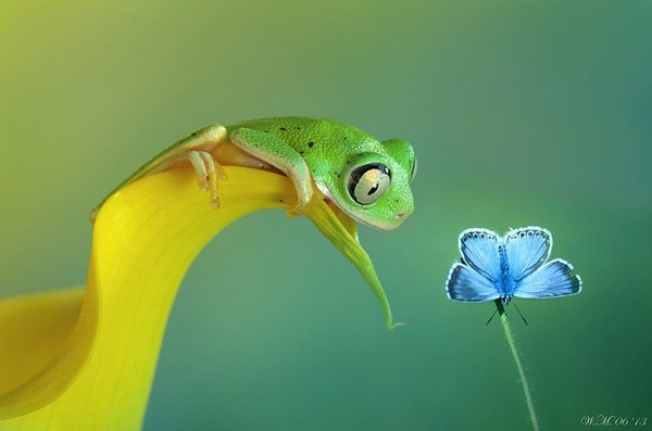 Never seen stunning images of the frogs - NICE PLACE TO VISIT