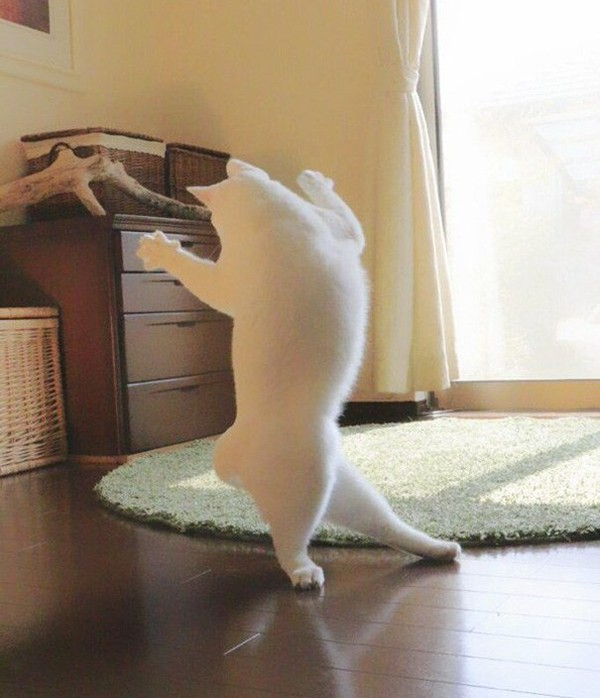 Images of Ballet Cat Dances Similar Nobody's Viewing - NICE PLACE TO VISIT