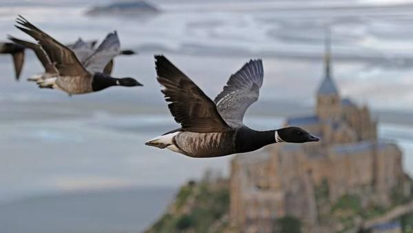 Un tour du monde à vol d'oiseau | ARTE