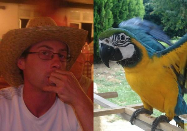Blog de oiseau32