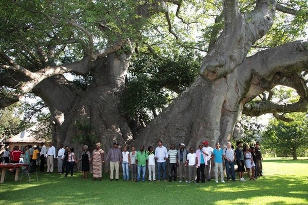 Quite remarkable savanna baobab tree - NICE PLACE TO VISIT