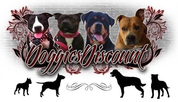 boutique pour chiens !