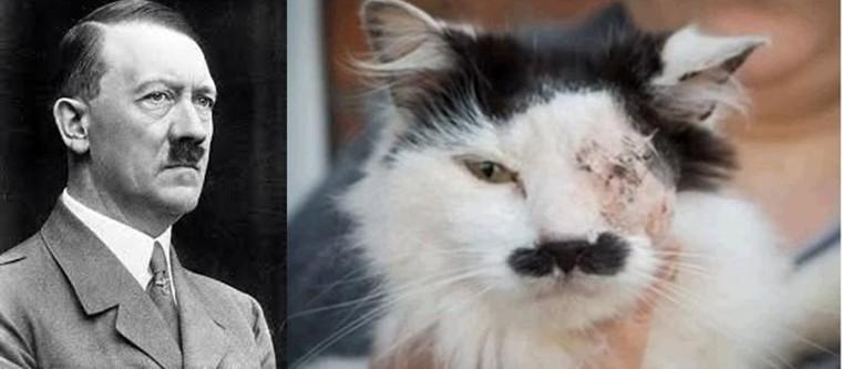 Un chat torturé parce qu'il ressemblait à Hitler - Nordpresse