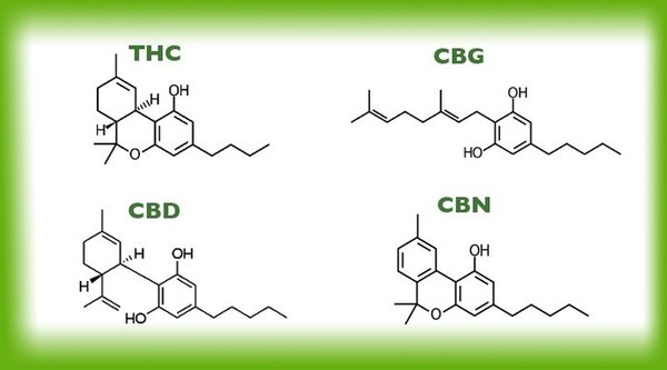 Cannabinoids: How They Work in Our Body?