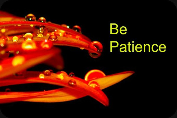 Patience is the Key to Success.|Daily Poetry and Stories Portal | Easy Branches